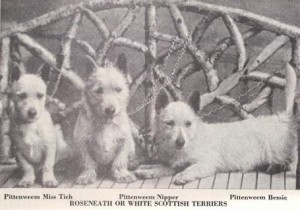 Scotties White von 1899