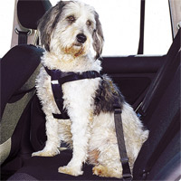 Hundegurt für den Westie im Auto