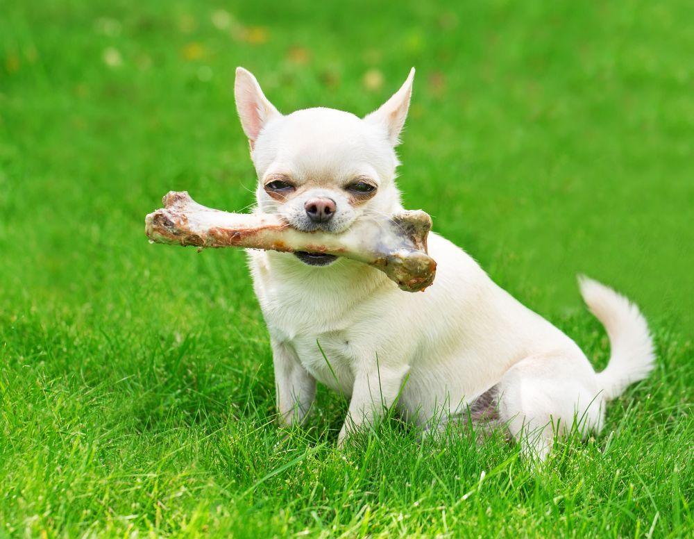 Welche Hunderasse Lebt Am Längsten
