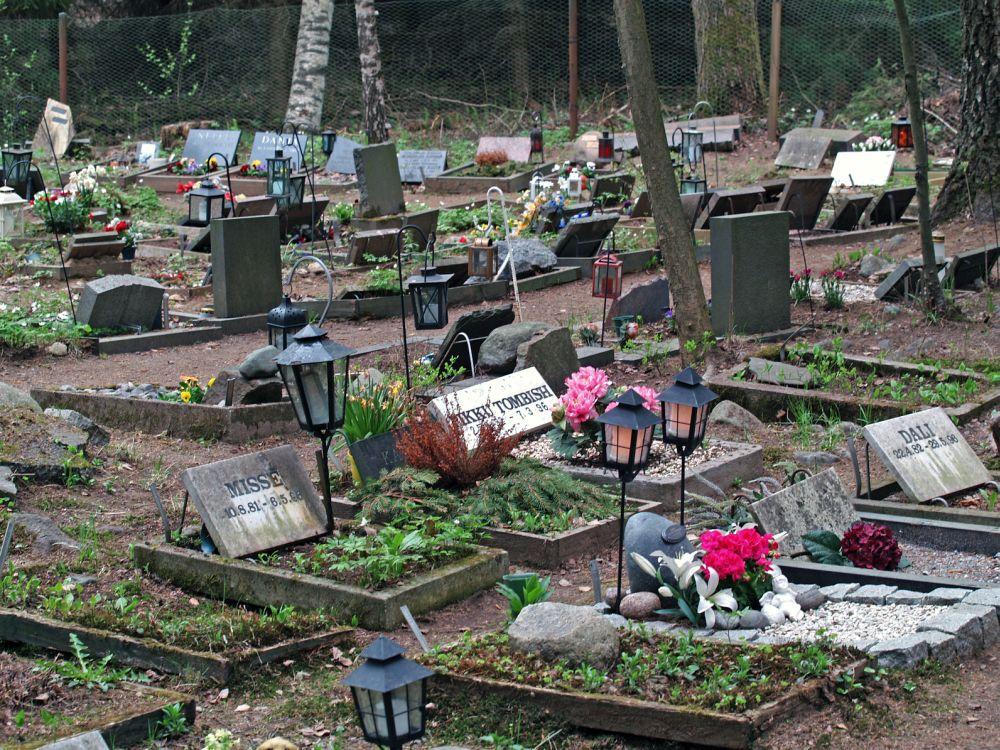 Den Westie auf dem Tierfriedhof begraben.